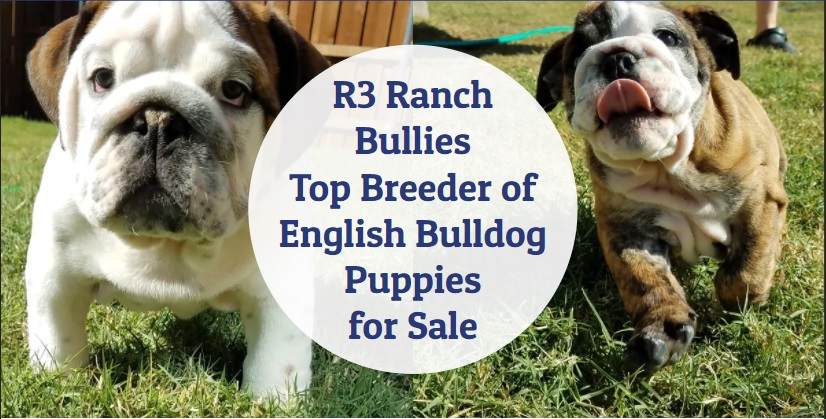 R3 Ranch Bullies