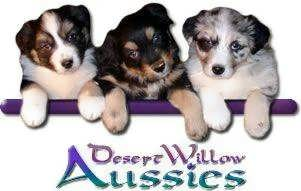 Desert Willow Aussies