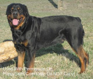 Hat Creek Registered Rottweilers