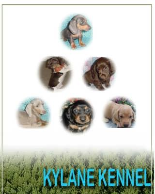 Kylane Kennel