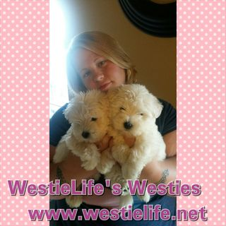 WestieLife's Westies